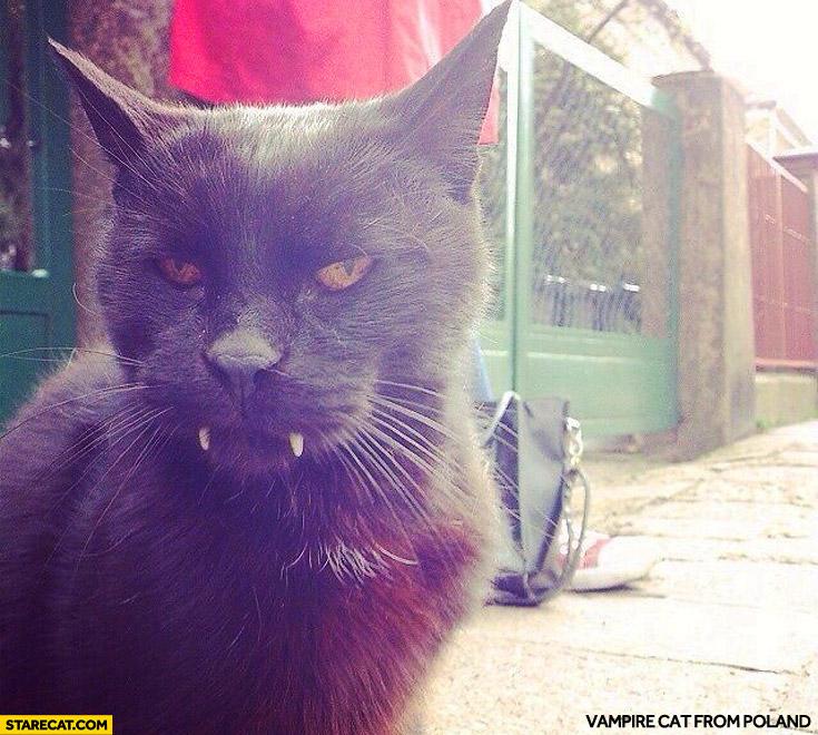 Vampire Cat from Poland