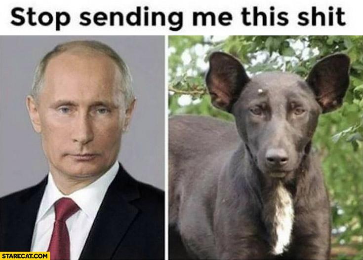 Vladimir Putin looks like a dog stop sending me this shit