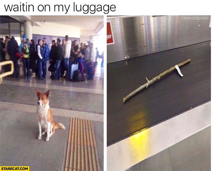 Waiting on my luggage dog at the airport waiting for a stick