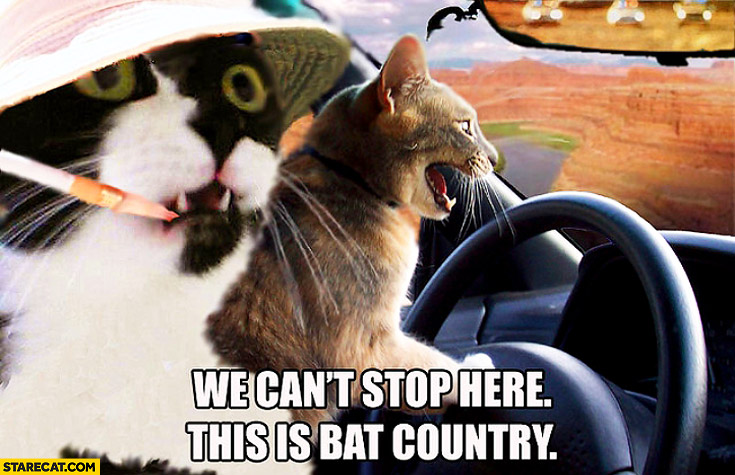 We can't stop here this is bat country cats driving