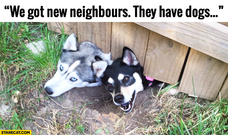 We got new neighbours, they have dogs. Heads under the fence