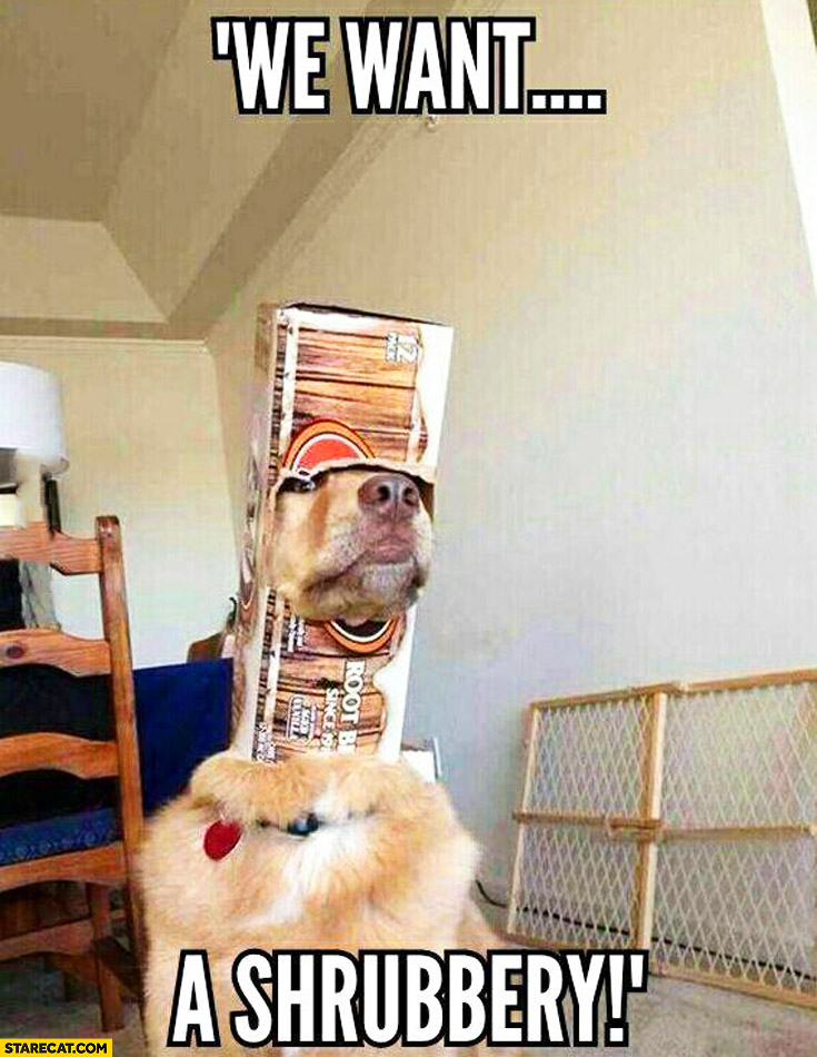 We want a shrubbery! Dog with a box on his head