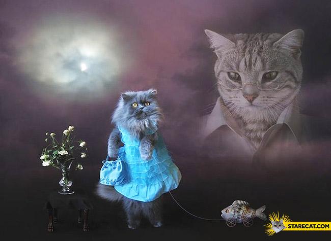 Weirdest cat photo in the internet