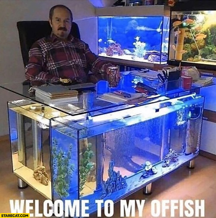 Welcome to my offish office full of aquariums