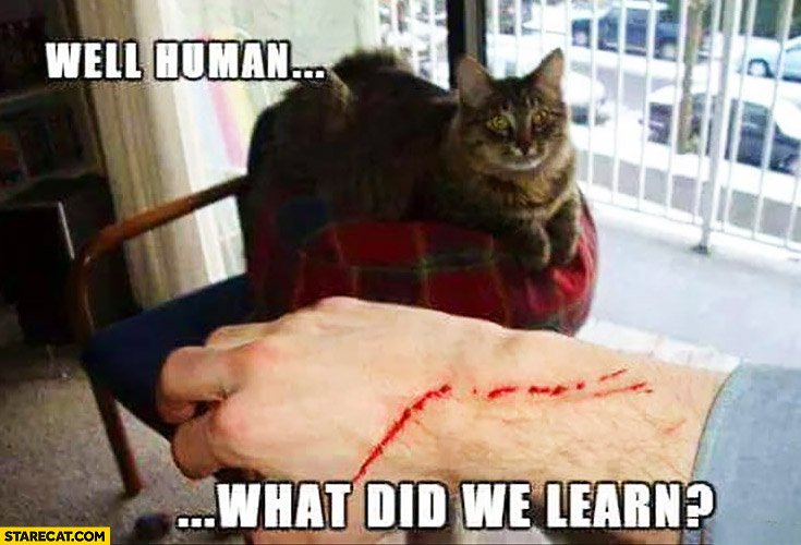 Well human what did we learn? Scars cat