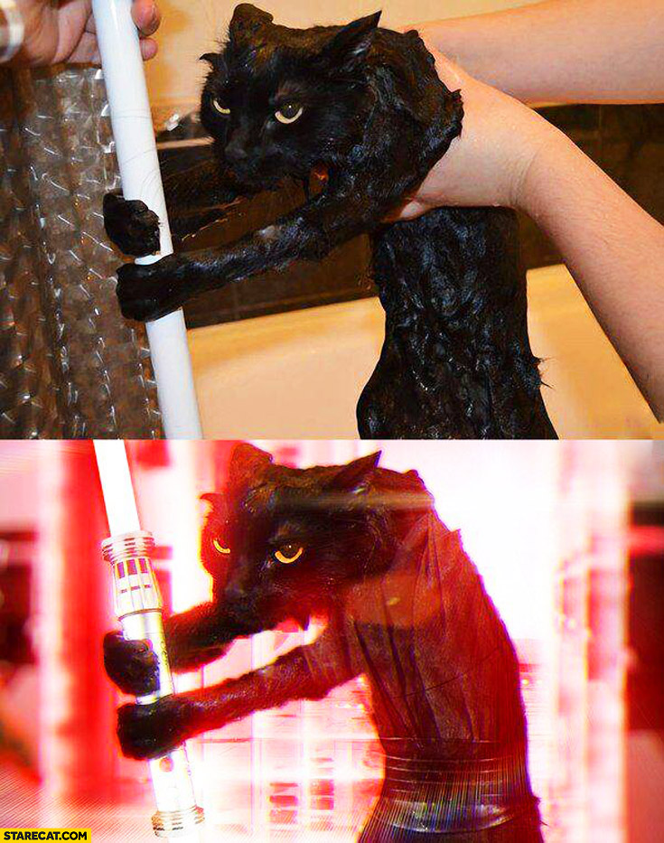 Wet cat after shower photoshopped lightsaber jedi