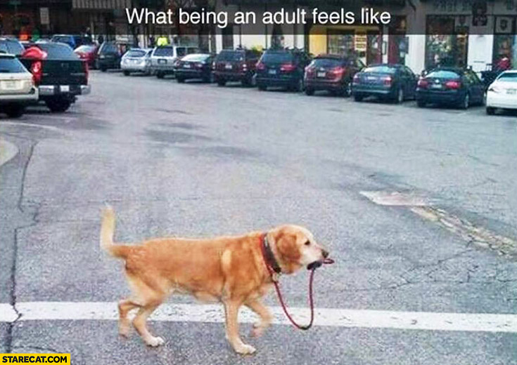 What being an adult feels like dog walking himself