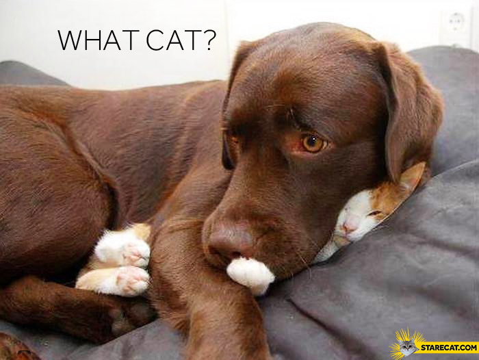 What cat? dog