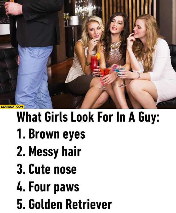 What girls look for in a guy: 1. brown eyes, 2. messy hair, 3.cute nose, 4. four paws, 5. Golden Retriever
