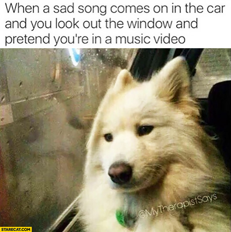 When a sad song comes on in the car and you look out the window and pretend you're in a music video sad dog
