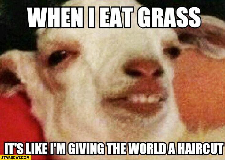 When I eat grass it's like I'm giving the world a haircut sheep meme