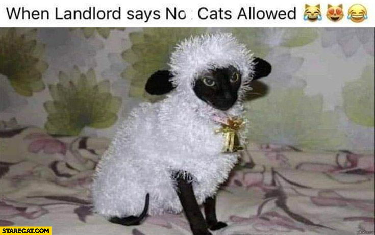 When landlord says no cats allowed cat dressed as a sheep