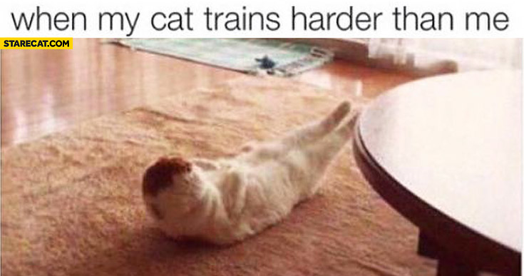 When my cat trains harder than me