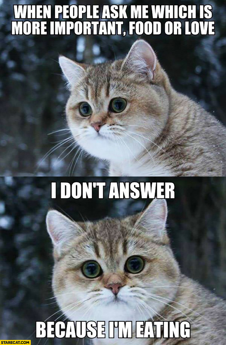 When people ask me which is more important: food or love I don't answer because I'm eating cat meme