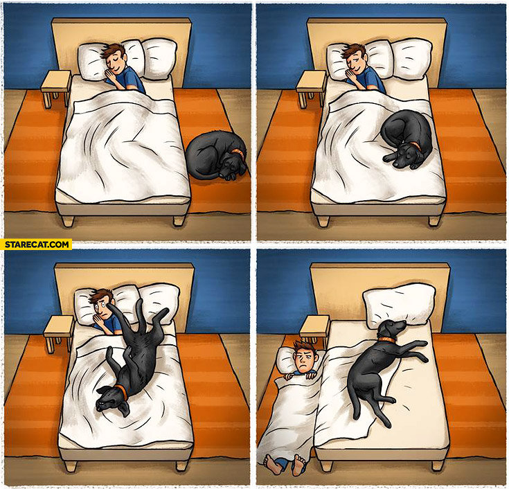 When sleeping with a dog