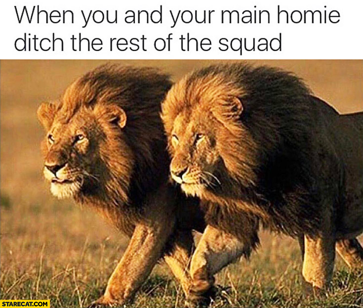 When you and your main homie ditch the rest of the squad lions