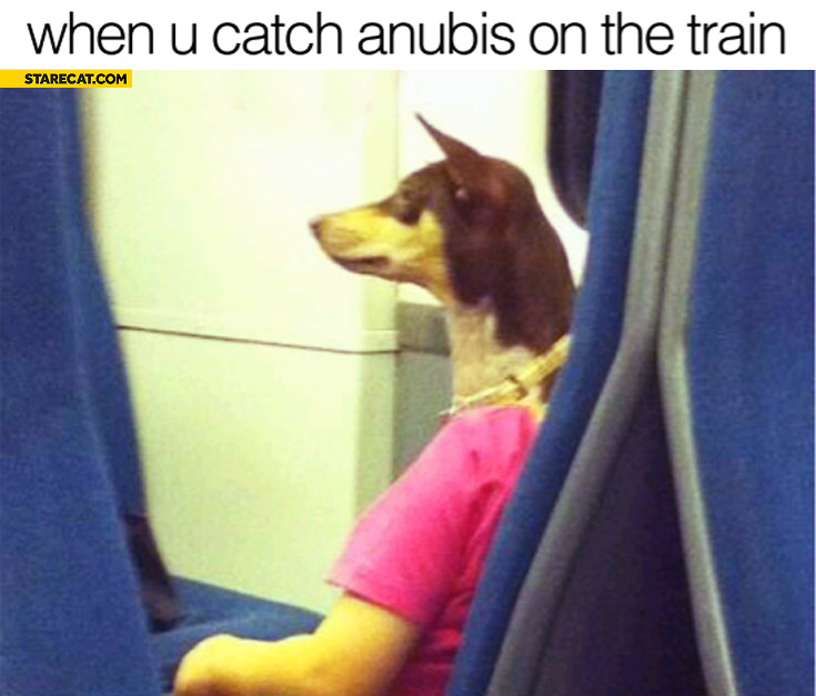 When you catch Anubis on the train dog