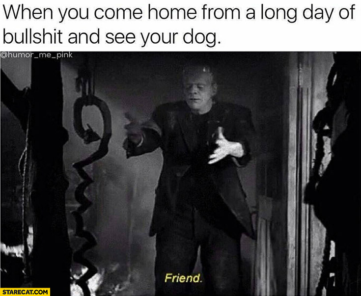 When you come home from a long day of bullshit and see your dog Frankenstein friend