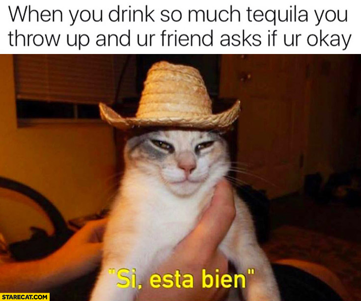 When you drink so much Tequila you throw up and your friend asks if youre okay. Si esta bien drunk cat