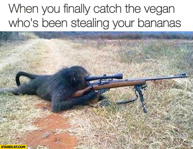 When you finally catch the vegan who's been stealing your bananas. Sniper monkey with a rifle