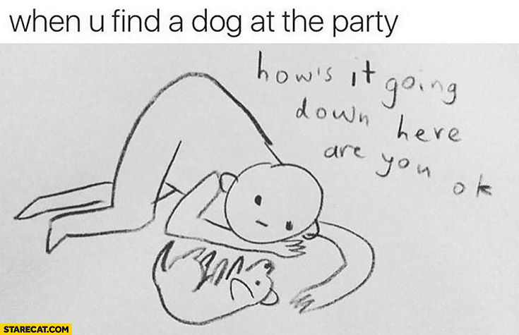 When you find a dog at the party: how it's going down here? Are you ok?