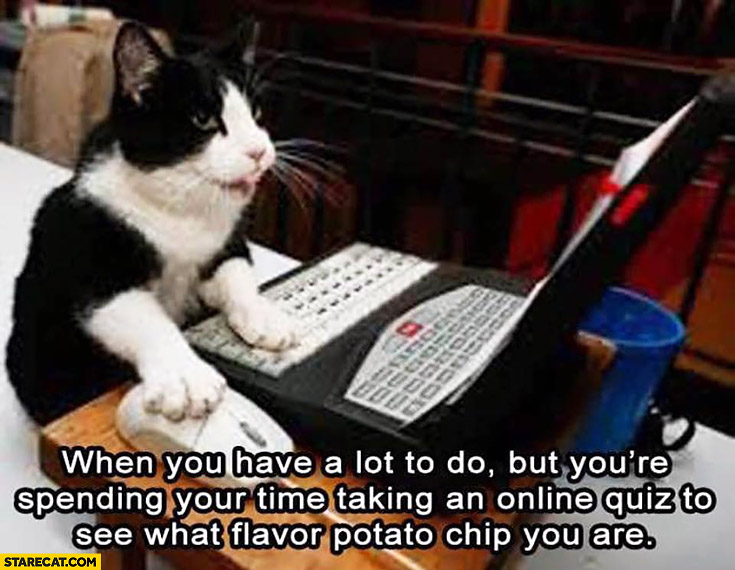 When you have a lot to do but you're spending your time taking an online quiz to see what flavor potato chip you are cat