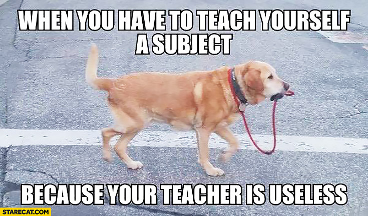 When you have to teach yourself a subject because your teacher is uselsess – dog walking himself