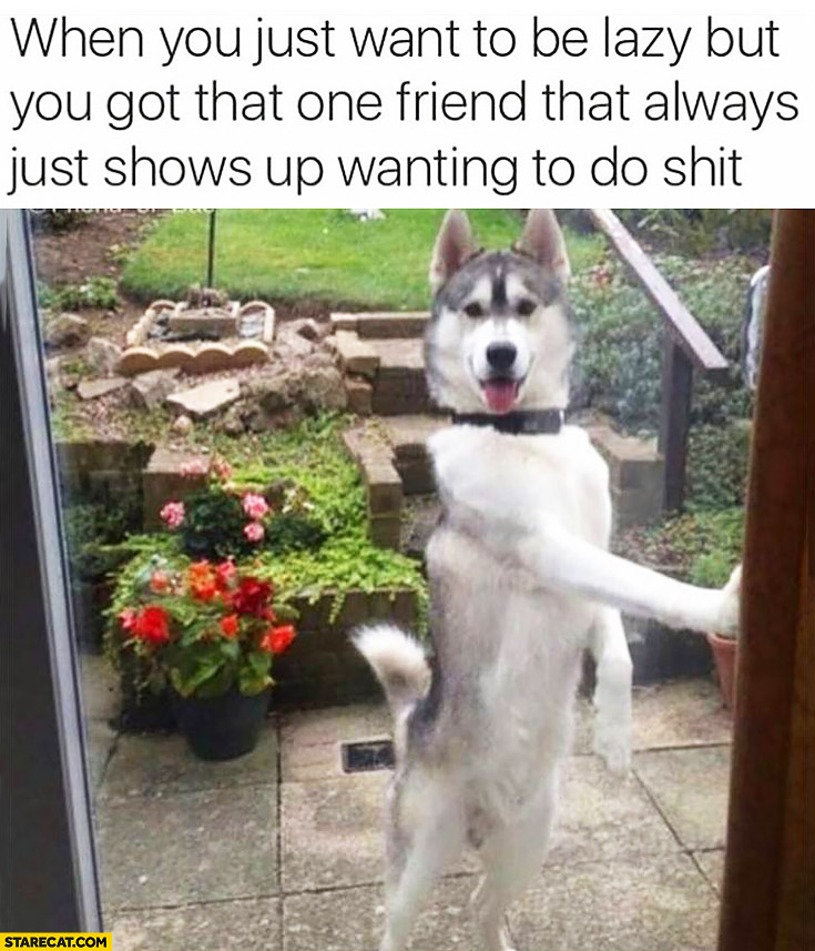 When you just want to be lazy but got that one friend that always just shows up wanting to do shit husky dog