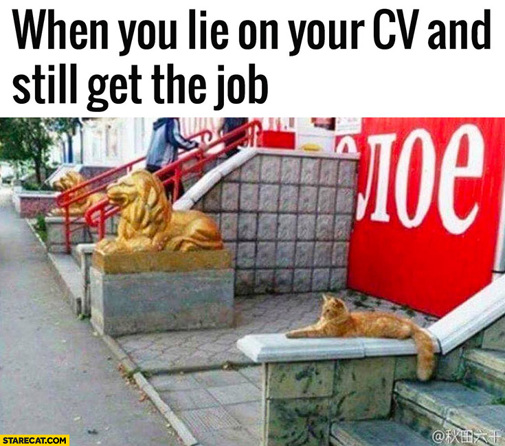 When you lie on your CV and still get the job cat pretending to be a lion