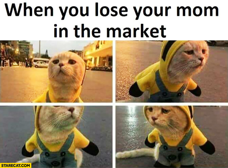 When you lose your mom in the market sad cat