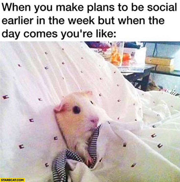 When you make plans to be social earlier in the week but when the day comes you're like a hamster in bed