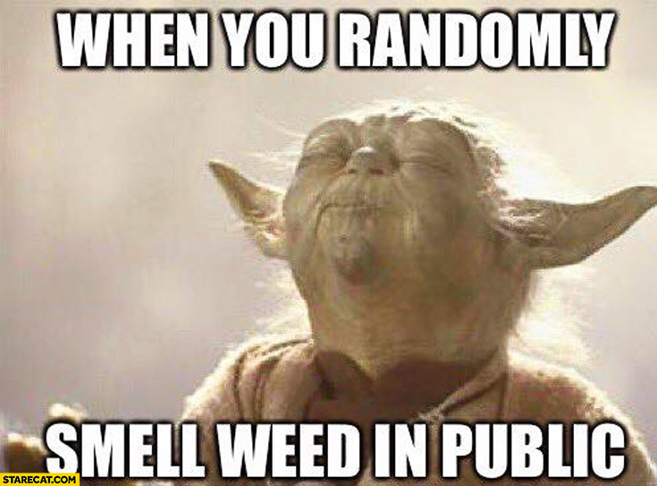 When you randomly smell weed in public Yoda meme