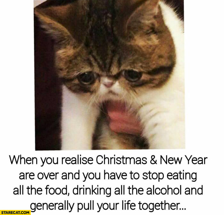 When you realise Christmas and New Year are over and you have to stop eating all the food drinking alcohol and generally pull your life together sad cat
