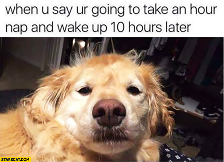When you say you're going to take an hour nap and wake up 10 hours later messed up dog