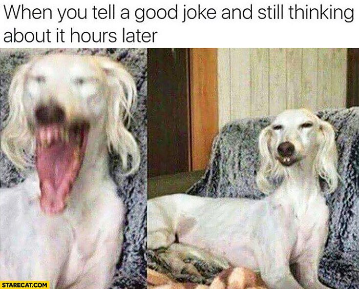 When you tell a good joke and still thinking about it hours later weird dog