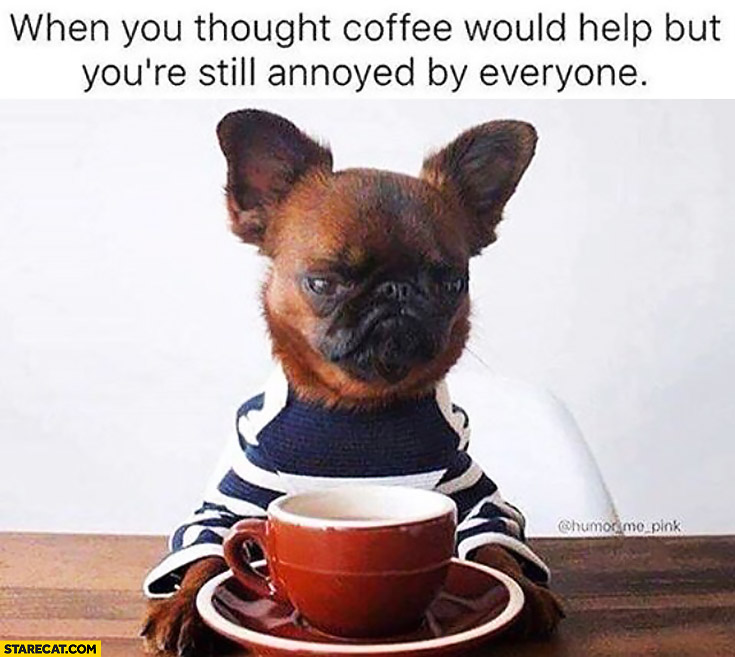 When you thought coffee would help but you're still annoyed by everyone. Angry dog