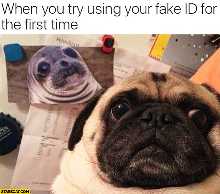 When you try using your fake ID for the first time dog pug seal