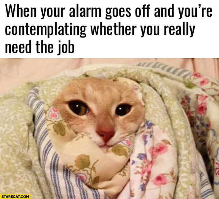 When your alarm goes off and you're contemplating whether you really need the job cat wrapped in blankets