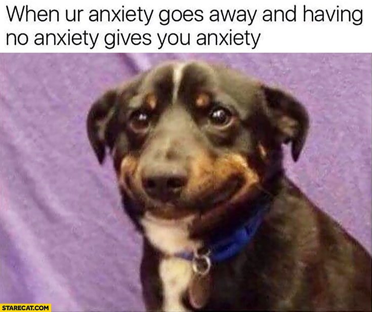 When your anxiety goes away and having no anxiety gives you anxiety silly dog