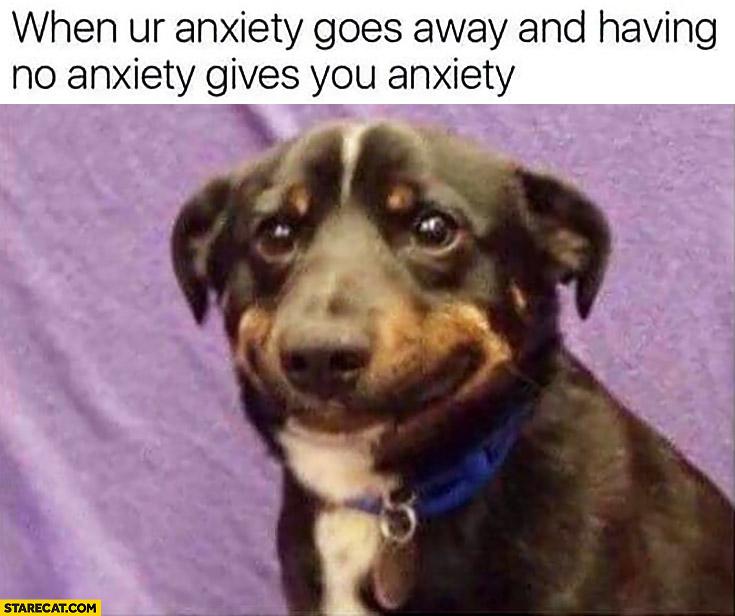 Anxiety Memes Starecat Com