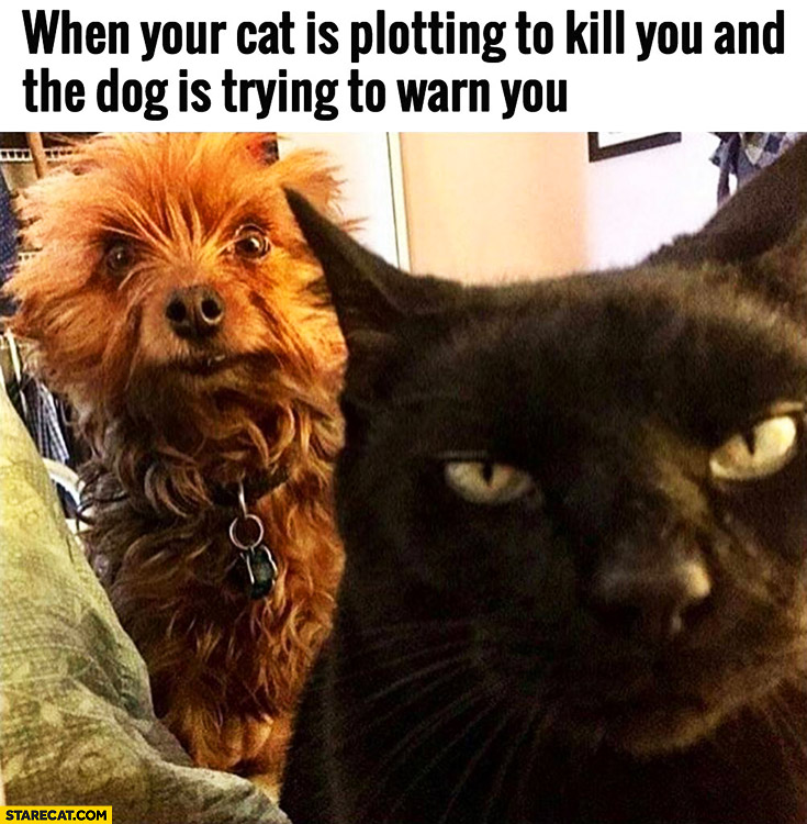 When your cat is plotting to kill you and the dog is trying to warn you