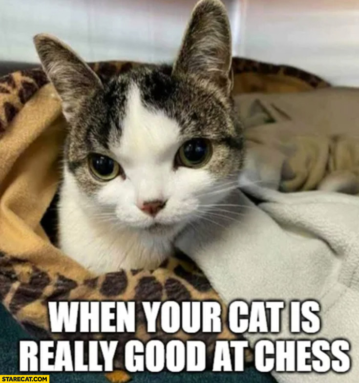 When your cat is really good at chess Beth Harmon wide eyes stance queen's gambit