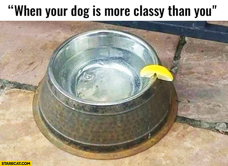 When your dog is more classy than you water with lemon