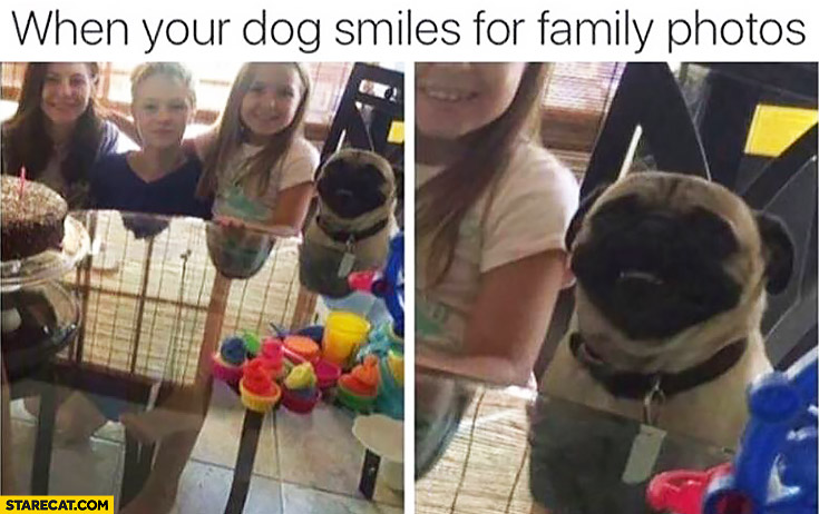 When your dog smiles for family photos happy pug