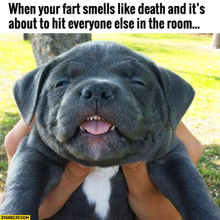 When your fart smells like death and it's about to hit everyone else in the room cute dog