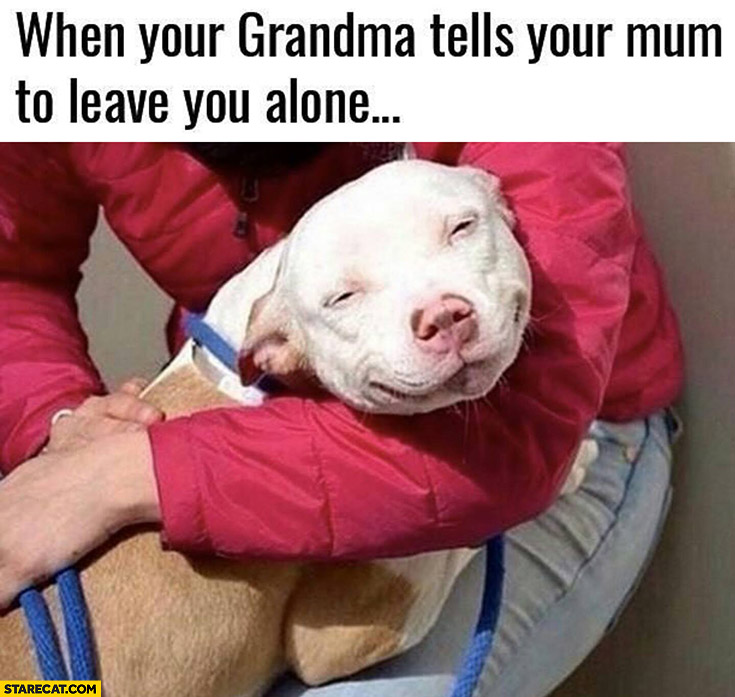 When your grandma tells your mum to leave you alone happy dog