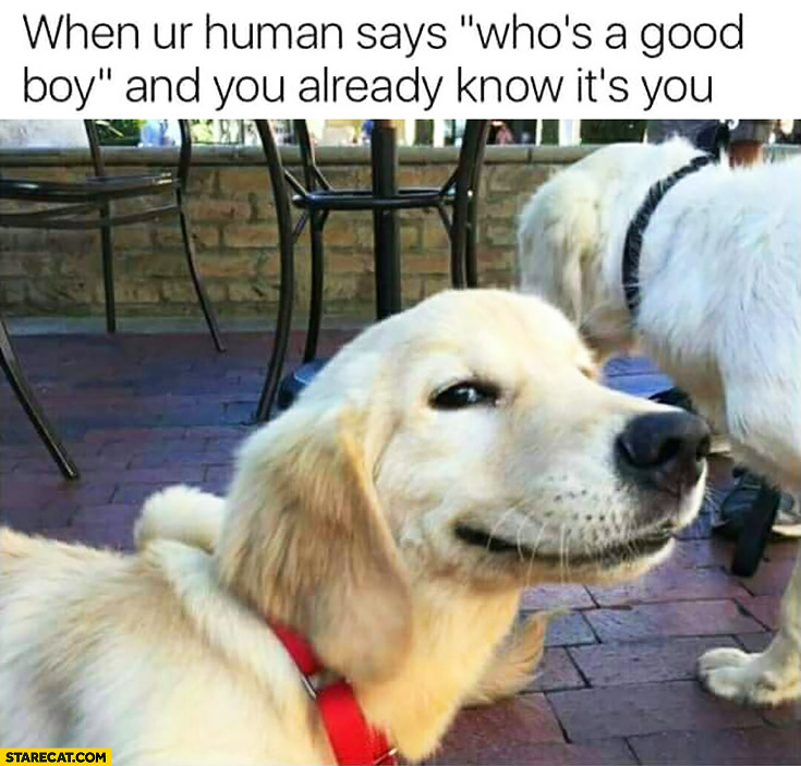 "When your human says ""who's a good boy?"" and you already know it's you dog"