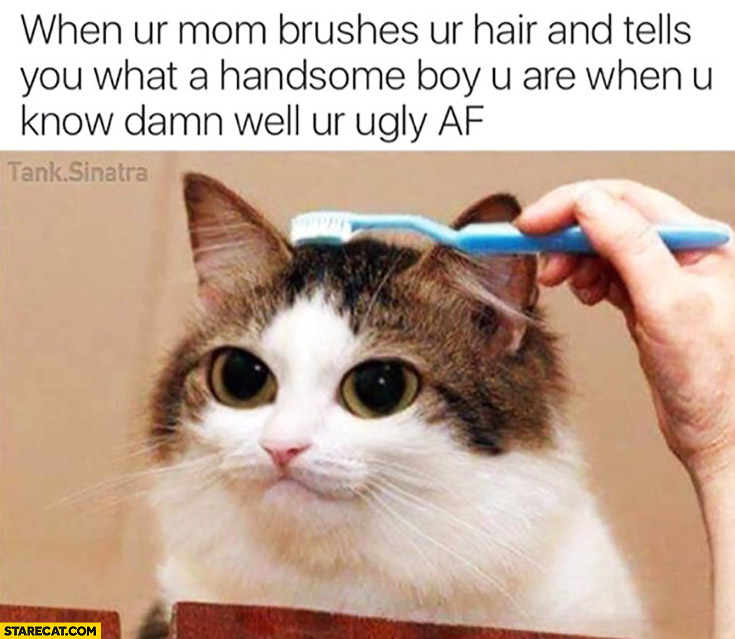 When your mom brushes your hair and tells you what a handsome boy you are when you know damn well youre ugly af cat