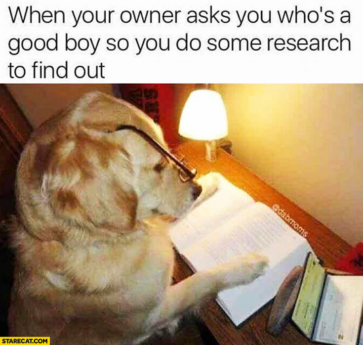 When your owner asks you who's a good boy, so you do some research to find out. Dog studying