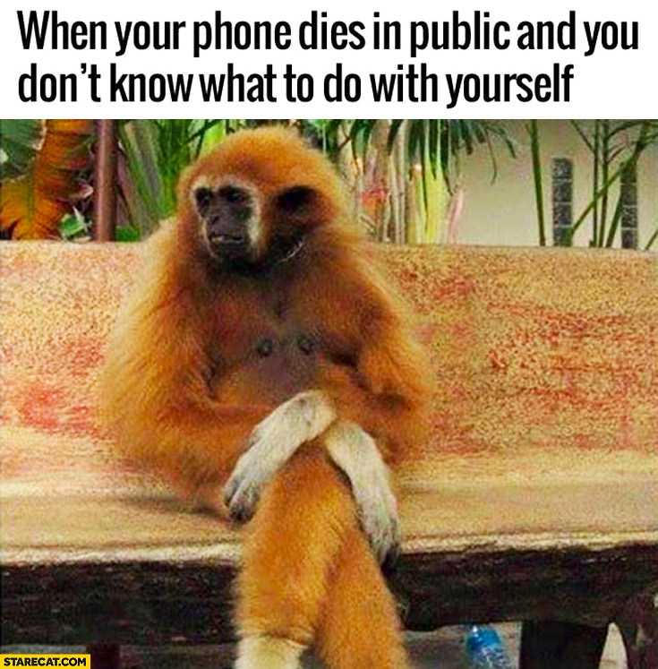 When your phone dies in public and you dont know what to do with yourself sad monkey